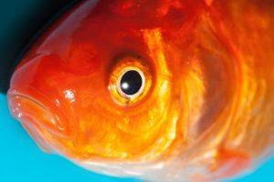 渋谷金魚のネタバレと考察